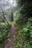 Bana i djungelvandring i den Bali Indonesien mycket gröna växter och vattenfallet Royaltyfri Fotografi