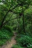 Bana i en frodig och grönskande skog Arkivfoton