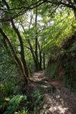 Bana i en frodig och grönskande skog Royaltyfria Bilder