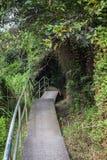 Bana i en frodig skog i Hong Kong Arkivfoto