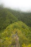 Bana i en grön skog med dimma kanariefågelöar tenerife spain Arkivfoton