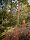 Bana i en höstbokträdskog på en brant backe med stupade sidor i yorkshire England arkivfoto