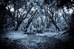 Bana i en konstig mörk skog arkivfoton