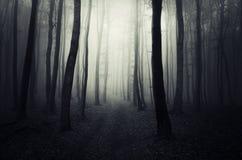 Bana i en mörk mystisk skog på allhelgonaafton arkivfoton