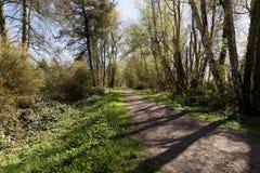 Bana i en skog Fotografering för Bildbyråer