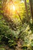 Bana i en skog arkivbilder