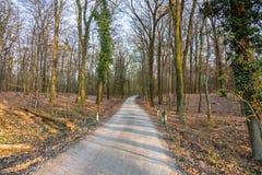 Bana i en torr skog p? solnedg?ngen fotografering för bildbyråer