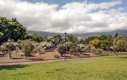 Bana i en trädgård med palmträd Fotografering för Bildbyråer