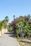 Bana i en trädgård med palmträd Arkivfoton