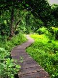 Bana i gräs och skog Royaltyfri Bild