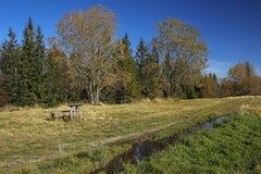 Bana i höstfältet i Gorce berg, Polen Arkivbilder