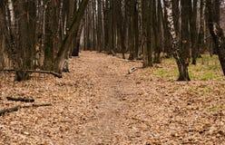 Bana i höstskogen Arkivfoton