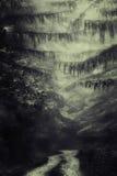 Bana i mörk djup skog royaltyfri bild