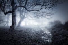Bana i mörk och läskig skog royaltyfria bilder