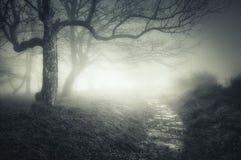 Bana i mörk och läskig skog arkivfoto