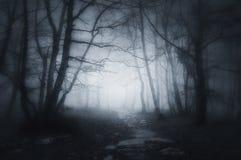 Bana i mörk och läskig skog royaltyfri foto