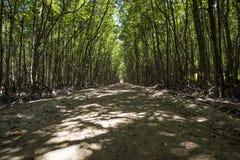 Bana i mangroven på ön för apa för canGio-` s arkivfoton