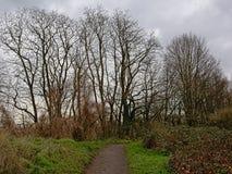 Bana i - mellan buskar som leder för att gör bar askaträd på en molnig vinterdag arkivbilder