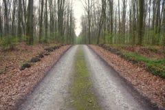 Bana i morgonvårskogen Royaltyfri Fotografi