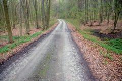 Bana i morgonvårskogen Royaltyfri Bild