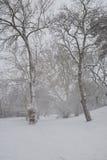 Bana i parkera med snö Royaltyfri Bild
