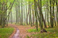Bana i skog Royaltyfria Foton