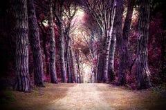 Bana i skog Royaltyfria Bilder