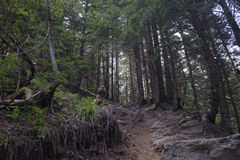 Bana i skog arkivfoto