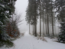 Bana i skog Arkivfoton