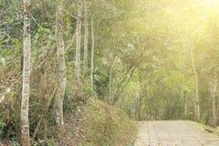Bana i skog under solljus Arkivfoto