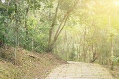 Bana i skog under solljus Royaltyfri Foto