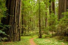 Bana i skogen Royaltyfri Bild