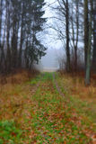 bana i skogen Royaltyfria Bilder