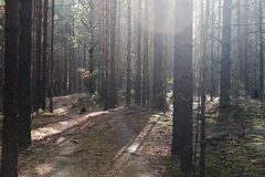 bana i skogen arkivbilder