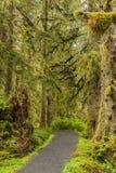 Bana in i skogen Fotografering för Bildbyråer