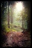bana i skogen Arkivbild