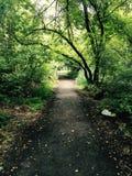 bana i skogen arkivfoto