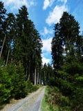 Bana in i skogen Arkivfoto