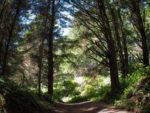 Bana i skogen Arkivfoton