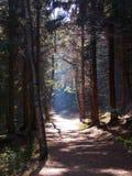 bana i skogen Royaltyfria Foton