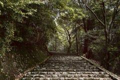 Bana in i skogen i Arashiyama, Japan arkivfoton