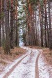 Bana i skogen i början av vintern Den första snön på vägen i den djupfrysta skogen fotografering för bildbyråer