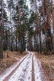 Bana i skogen i början av vintern Den första snön på vägen i den djupfrysta skogen royaltyfri fotografi