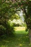 Bana i skogen bland träden Dörr till den hemliga trädgården Arkivfoton