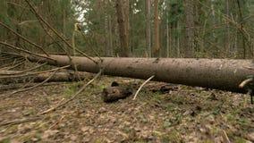 Bana i skogen - flygkameraskott lager videofilmer