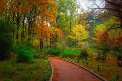 Bana i skogen i höst vid dag fotografering för bildbyråer