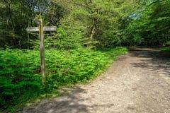 Bana i skogen med en teckenstolpe royaltyfri fotografi