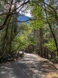 Bana i skogen på den Yosemite nationalparken royaltyfria bilder