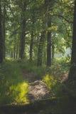 Bana i skogsolen som kommer till och med träden med skuggor på banan ottan går i den Oisterwijkse Bossen enen Vennen arkivbild