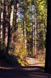 Bana i solljuset för skog på våren arkivfoton